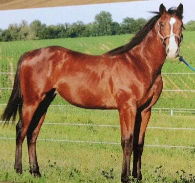 Firewater Wildcat Chuck Givens Born-2-Win-Horse-Sale