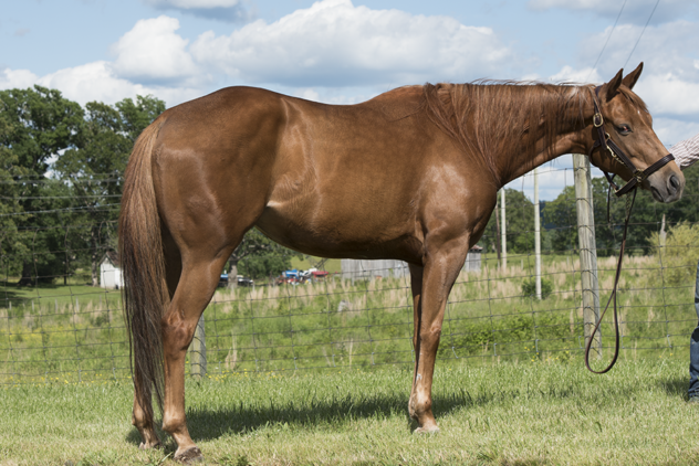 honor-this-queen born=2-win-horse sale