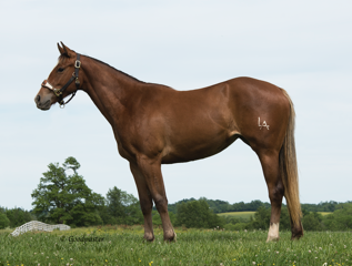 Makin Her Famous Thoroughbred- Born 2 Win Horse Sale