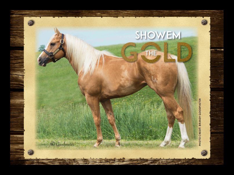 Showem-the-Gold Stallions-Page photo by Chuck-Givens